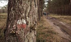 RZL Veluwe (7) (Gatersleben) Tags: kamperen outdoor rzl rugbzaklopers veluwe wandelen nederland