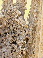 Saguaro Skeletal Remains-10 <<>> IMG_0248 - Version 2 (Chic Bee) Tags: saguaro ribs remains nedharris sabinocanyon sabinocanyonvolunteernaturalists guides naturewalk 20180131 tucson arizona southwesternusa americansouthwest america nature walking