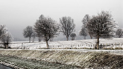 foggy winter morning (j.p.yef) Tags: peterfey jpyef yef landscape seasons winter trees photomanipulation velmede germany houses aoi elitegalleryaoi bestcapturesaoi aoi3levels