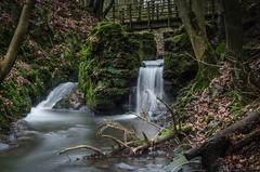 Dunnottar Plunge Pool (daedmike) Tags: scotland dunnottar woods forrest trees pool paddling bathing grampian stonehaven longexposure stream burn bridge abandoned relic