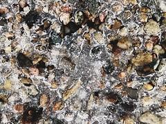 Today's ice storm (Roundy Photo) Tags: visitkc frozen winter pebbles shotoniphone iphone vsco missouri kansascity kcmo icestorm