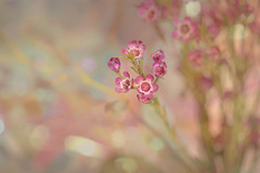Happy Last Day of February! (Zara Calista) Tags: bokeh pink light white soft blue teal floral flora nikon