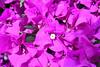 flowersx (Jota M - Photography) Tags: textura