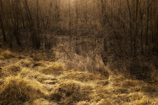 Light in the woodlands