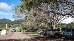 Waimea (39) (BoyUtot) Tags: waimea waimeavalley bigisland hawaii waimeafarmersmarket roadtrip panasonicgh1 lumix 100300mm ramesesmendoza travel nature landscape