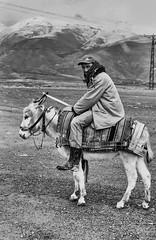 Shepherd from Erzincan (Street.and.Portraits) Tags: shepherd erzincan turkey donkey portrait photography blackwhite monochrome bw büyükçakırmanköyü tr
