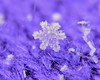 Crystaline (BKHagar *Kim*) Tags: bkhagar snowflake macro snow closeup freezing icy cold athens al limestonecounty winter