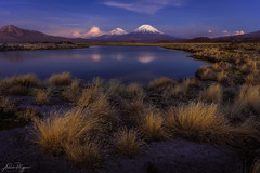 Blue hour (Andres Puiggros) Tags: d500 altiplano arica chile clima landscape lauca nikon paisaje puna weather blue hour hora azul night long exposure payachatas volcano
