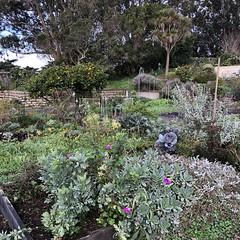 Community Garden, Fort Mason (Melinda Stuart) Tags: plants flowers sanfrancisco garden public ggnra park orange fruit vegetables growing community food tmt