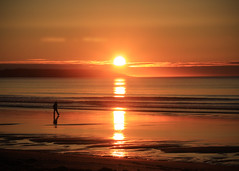 Carry On (Patricia McAtee - Photos of Maine) Tags: sunrise shore beachwalk ocean reflection alone morning seascape serene