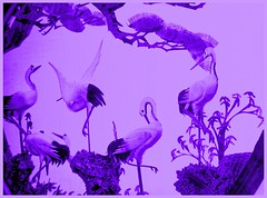 Cranes in Purple IMG_3808 (ForestPath) Tags: cranes purple macromondaysgroup themefortheweekmonochrome art carving glass glue delicate tiny elegantlines home usuallyonthemantlepiece
