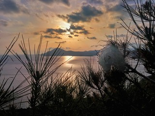Sunset and the Thaumetopoea pityocampa cocoon