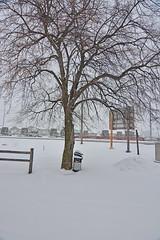 Winter Tree Between Storms (kendoman26) Tags: tree winter snow nikon nikond7100 topazdetail topazsoftware tokinaatx1228prodx tokina tokina1228 morrisillinois