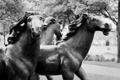 DSC_1223-2 Pferde Skulpturen am Pferdemarkt in Aurich; rennende Pferde, Bildhauer Bonifatius Stirnberg. (stadt + land) Tags: pferd skulpturen pferdemarkt rennende pferde bildhauer bonifatius stirnberg stadt kreisstadt aurich landkreis ostfriesland niedersachsen bilder rundgang sehenswürdigkeiten fotos reiseimpressionen imprssionen