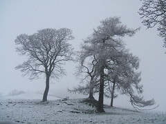 A cold winters day. (Bennydorm) Tags: sky inghilterra inglaterra angleterre europe uk britain gb england cumbria furness ulverston rural picturesque scenic fujifinepix february white trees cold winter snow