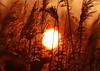 Sunrise (Steve Kletzi) Tags: sun rise sunrise sonne sonnenaufgang gras himmel sky shadow schatten schilf field glory