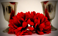 Vignette Flowers (Sdebord16) Tags: flower macro bright dark red color colors coloring flowers two reds silver green reflect reflection school class pic picture photo photography photographyclass love