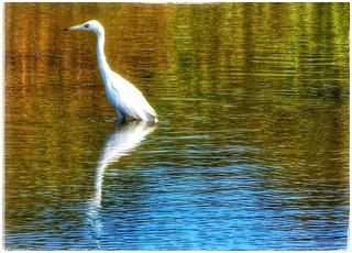 River- [Egret]