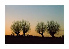 Sunset Willows - Kodak Gold 100 exp* (magnus.joensson) Tags: sweden swedish skåne söderslätt c41 nikon nikonfe nikkor 35105mm kodak gold 100 exp handheld countryside еппре