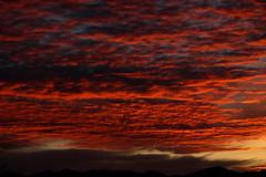 Sunrise 1 8 18 #40 (Az Skies Photography) Tags: sun rise sunrise morning dawn daybreak sky skyline skyscape rio rico arizona az riorico rioricoaz arizonasky arizonaskyline arizonaskyscape arizonasunrise red orange yellow gold golden salmon black january 8 2018 january82018 1818 182018 cloud clouds canon eos 80d canon80d canoneos80d eos80d