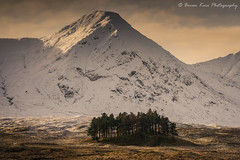 The Trees Of Rannoch Moor (.Brian Kerr Photography.) Tags: scotland scotspirit scottishlandscapes rannochmoor trees visitscotland formatthitech sonyuk a7rii landscapephotography photography outdoorphotography opoty briankerrphotography briankerrphoto appicoftheweek scottishhighlands scottishlandscape landscape cold winter snow frozen availablelight mountains
