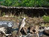 Halona Blowhole & Hanauma Bay Nature Preserve (61) (pensivelaw1) Tags: hawaii oahu halonablowhole hanaumabaynaturepreserve
