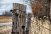 Fence Post (AP Imagery) Tags: post road farm ky barbed wire kentucky rural fence usa