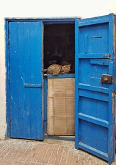 Cat (radimersky) Tags: morocco essaouira cat kot drzwi door day blue pet samrtphone samsung7s medina streetphotography oldtown