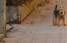 Abbadia Lariana (Beppe50) Tags: lagodicomo ramo di lecco