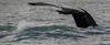 Goodbye!!  =O) (Pep Peñarroya) Tags: iceland whale