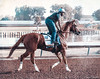 Los Alamitos Race Track 9.10.16 16 (Marcie Gonzalez) Tags: california chrome racehorse racehorses race horse horses track racing racer ride rider sport event fast run running round southern calif ca usa us north america sports practice training los alamitos