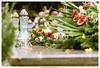 Frieden (dirkbreisch) Tags: köln einfachnurgut friedhof herbst ruhe dirkbreischphotography sonya7ii melatenfriedhof sony70200f2 flowers blumen
