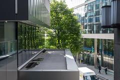 City tree (Spannarama) Tags: tree leaves green nature urbannature windows reflections architecture basinghallstreet london uk