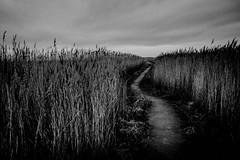 Untitled... Path to the Sea... (l1ze) Tags: denmark danmark odsherred sjælland zealand lyngen dk leica elmaritm 28mm f28 asph path pathtothesea