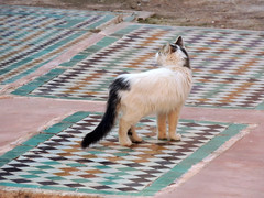 Walking the graves (Shahrazad26) Tags: marrakech saadischegraven saadiengraves marokko morocco maroc kat poes katz chat cat zellig zellij mozaïek mosaic