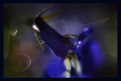 flock drop (pete ware) Tags: water droplet flock flower petal macro peteware dark archive