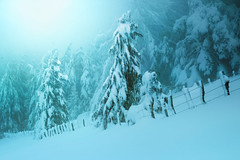 Frio (arbioi) Tags: amanecer baztan bosque canon gr11 euskalherria eos40d enekorri esteribar eugi frio paisaje kintoreal okoro urkiaga montaña montañas navarra nafarroa naturaleza nieve nieblas niebla snow pirineo pyrenees pirineos pyrenee pyrennee peñadelosgenerales quintoreal zagua