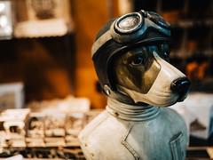Aviator Dog (La Chachalaca Fotografía) Tags: dog perro chien aviator pilot goggles noble gm5 lumix