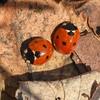 February ladybugs. 🐞 (agnieszka.a.morawska) Tags: insect nature february wiosna spring manuallens helios44m helios44 helios ladybird ladybug biedronka