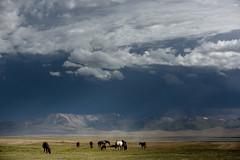 Kirghizistan: sur les rives du lac Song Kul. (claude gourlay) Tags: kirghizistan asie asia claudegourlay songkul