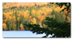 forest walk (Ste_✪) Tags: eos760d canada canadá québec lakescape lago lake forest foresta colorfulforest autunno autumn otoño ottobre2016 foliage