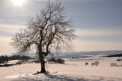 GebaBaum (kadege59) Tags: nature natur nikond3300 nikon nikkor germany deutschland europe rhön geba wow wonderfulnature weather winter snow scenicsnotjustlandscapes wald thüringen thuringia