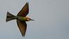 NA5_1644.jpg (naser7363) Tags: chestnutheadedbeeeater birds