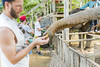 Feeding the elephants (snej1972) Tags: urlaub holiday vacation vacanze thailad siam asien suedostasien qualitytime singleholiday asia djungle dschungel urwald fluss river boat boot kanu kajak elefant elephant nationalparc parque wood khaolak thailand
