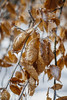 Ice Storm [02.08.18] (Andrew H Wagner | AHWagner Photo) Tags: 5dmk3 5d3 5dmkiii 5dmarkiii 5dmark3 canon eos 50l 50mm f12 f12l bokeh dof frozen winter ice nature snow cold leaves branches trees tree outdoors explore exploration exploring hiking cunninghamfalls cunninghamfallsstatepark thurmont maryland md