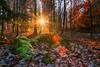 Feeling the warmth (aramfranke) Tags: landscape forest lighting light sun sunset sunrise sundown green day daylight autumn winter snow frost leaves orange contrast colourful countryside nature tree germany nikond5500 nikon atmosphere sunlight rocks rural morninglight morning view