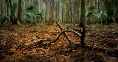 le chemin du paradis (JDS Fine Art Photography) Tags: symbolic symbols inspirational spiritual atmosphere mystic mystical beauty nature naturalbeauty naturesbeauty