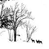 2018-01-15_06-30-23-01 (MILESI FEDERICO) Tags: milesi milesifederico montagna montagne mountain italia italy iamnikon inmontagna inverno ice wild winter piemonte piedmont visitpiedmont valsusa valliolimpiche valdisusa valledisusa cittàmetropolitanaditorino freddo nikon nikond7100 nital natura nature nat neve nevicata snow 2018 gennaio alpi alpicozie altavallesusa altavaldisusa d7100 dettagli details cesana cesanatorinese bianconero bw biancoenero blackandwhite blackwhite monocromatico desaturazione wildlife vita life animal animale caprioli mammiferi silhouette alberi albero ngc ngg europa europe explorer