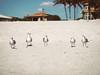 (peyt0nnn) Tags: water sky bird seagulls clouds ocean sea beach sand sun sunshine sunny florida sarasota tropical palm tree paradise cottage summer vacation outdoors