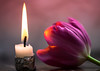 flame for the tulip (annacajem) Tags: tulip macromondays purple pink silver candle light simple flame flower marble